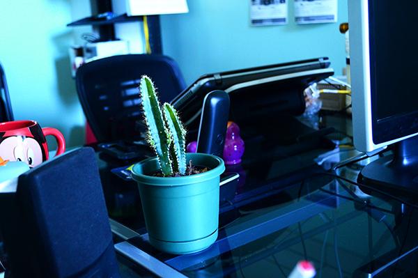 Cactus en la oficina