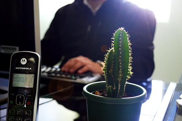 Por qué tenemos cactus en la oficina