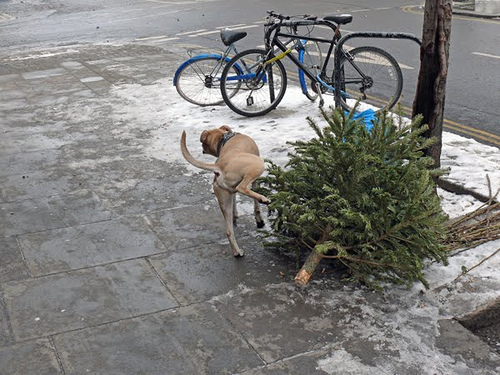 Cómo hicimos nuestro árbol de Navidad