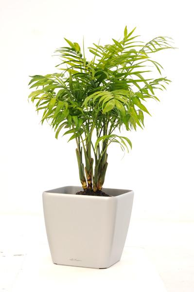Descubre la planta ideal para tu oficina ecolohosting - Planta de salon ...