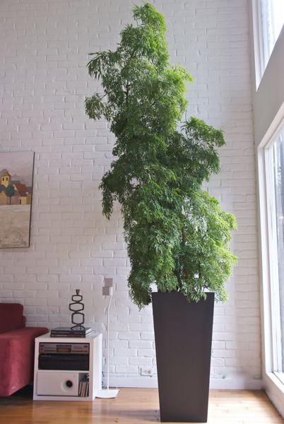 Descubre la planta ideal para tu oficina | Ecolohosting