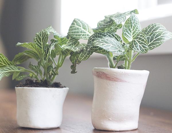 mejores plantas de oficinas grandes Descubre La Planta Ideal Para Tu Oficina Ecolohosting