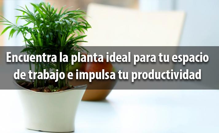 Encuentra la planta ideal para tu espacio de trabajo e impulsa tu productividad